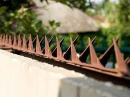 Anti Climb Razor Wall Spikes For Perimeter Security Home Security Tips Security Fence Home Safety Tips