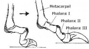 nails and why long toenails
