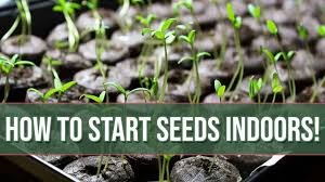 how to start seeds indoors everything