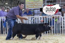 World Pork Expo | CPS Ring – Junior Poland China Barrows | The Pulse