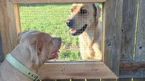 Guy Builds A Fence Window So His Dogs Can Talk To Their Friend Next Door Youtube