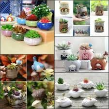 mini ceramic resin succulent plant