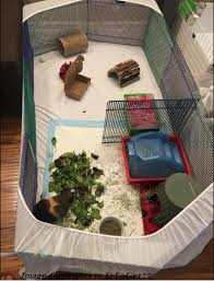 Which Pet Playpen Should I Get For My Small Furry Friend Small Furry Pets