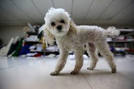 dog with toy stock news sports and
