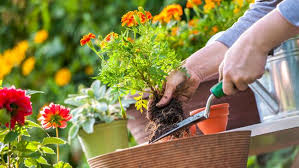 what to do in the garden in july bt