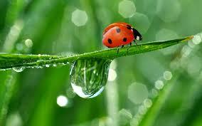 ladybug wallpaper 2880x1800 46392