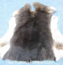rabbit pelts how to tan rabbit fur