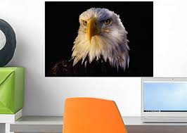Amazon Com Wallmonkeys Head Of Adult American Bald Eagle Wall Decal Peel And Stick Graphic Wm282087 18 In W X 12 In H Home Kitchen