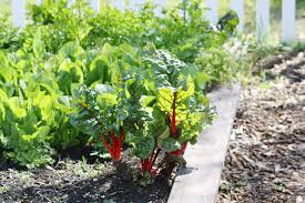 vegetable gardening during a drought