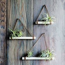 decorating with air plants met
