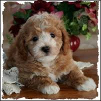 mixed breed puppies puppy toy