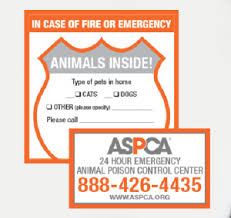 Free Pet Rescue Stickers For Your House Beingstray Com