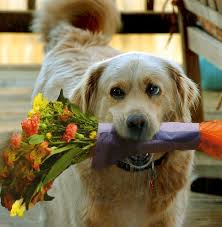 Dogs Holding Flowers - Album on Imgur