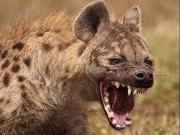 Humanos, hienas y glaciares: ¿Qué sucedió en la sierra de ...
