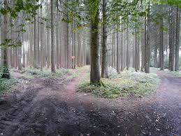 la forêt de saint hubert tourisme en
