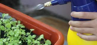 homemade pesticide archives