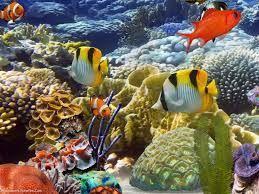 desktop aquarium 3d live wallpaper for
