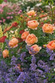 172 best plant combinations images