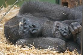 Gratis Afbeeldingen : wildlife, dierentuin, zoogdier, dichtbij ...