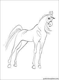 Kinderen Kleurplaat Paard Gratis Kleurplaten