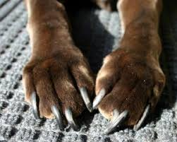 correct nail length for dogs