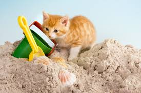 8 Ways To Keep Cats Out Of A Backyard Sandbox Lovetoknow