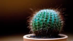 laki laki yang mengirim puisi dan seorang pemelihara kaktus yang