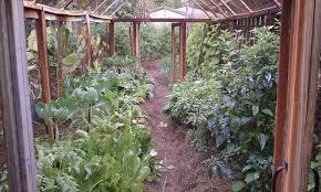 the florida vegetable garden a