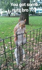 A Squirrel In Madison Square Park Wants Some Nuts 9gag