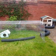the ideal home for your guinea pig pdsa