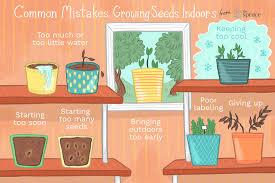 growing seeds indoors