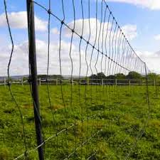 Electric Poultry Netting Advice On Electric Fencing For Chickens