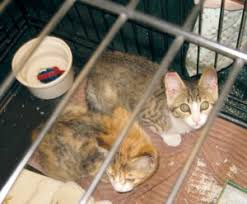 Labor of love helps reduce local feral cat numbers -