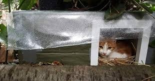 construire un abri pour chats errants