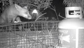 Electric Fences For Controlling Raccoons And Possums General Fruit Growing Growing Fruit