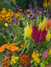 pest resistant plants more plant