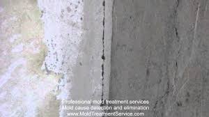 mold removal under wallpaper from