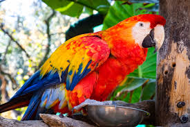Red And Blue Parrot · Free Stock Photo