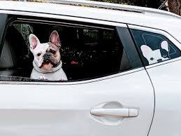 Frenchie Sticker Frenchiestore Black R Pied French Bulldog Car Dec
