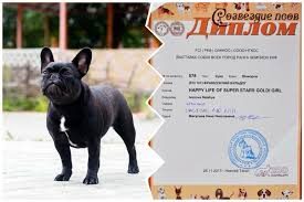 Happy Life of Super Stars French Bulldog Kennel: 2017