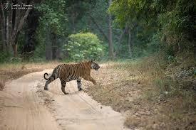Bandhavgarh Tiger Reserve Destination... - Sudhir Shivaram Photography | Facebook