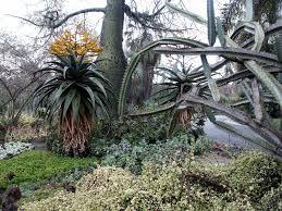 huntington desert garden a world class