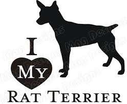 Rat Terrier Vinyl Dog Decal Silhouette In Your Colors Etsy