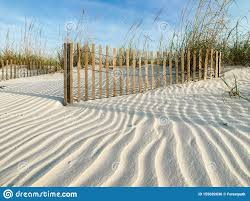 Sand Fences And Wind Patterns In The Dunes Stock Photo Image Of Pensacola Early 155692036