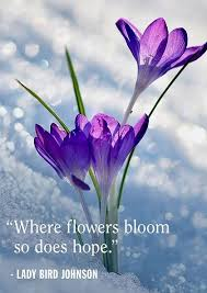 exclusive spring quotes to brighten your day bayart