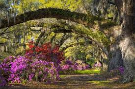 magnolia plantation gardens reviews