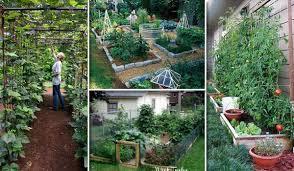 growing a successful vegetable garden