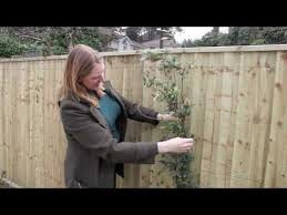 Gardening Tips Supporting Climbers Youtube
