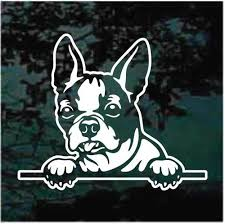 Cute Boston Terrier Peeking Decals Stickers Decal Junky