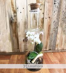 white orchid in a bottle orchids gift